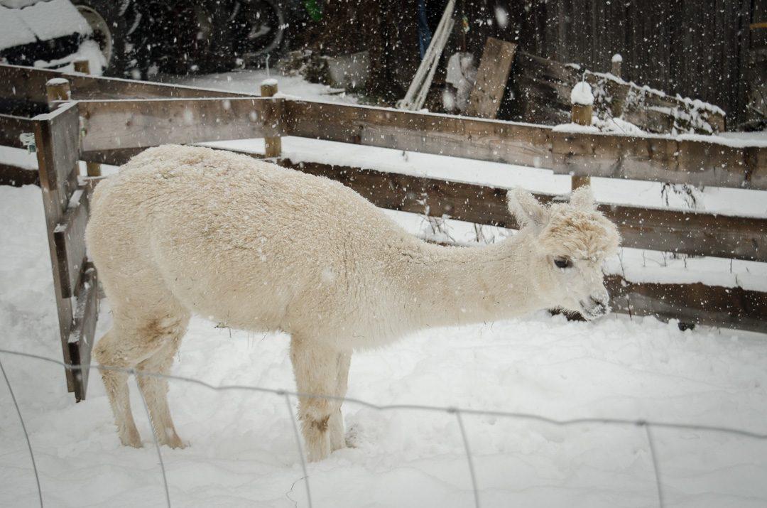 Kufstein im Winter - ISARBLOG