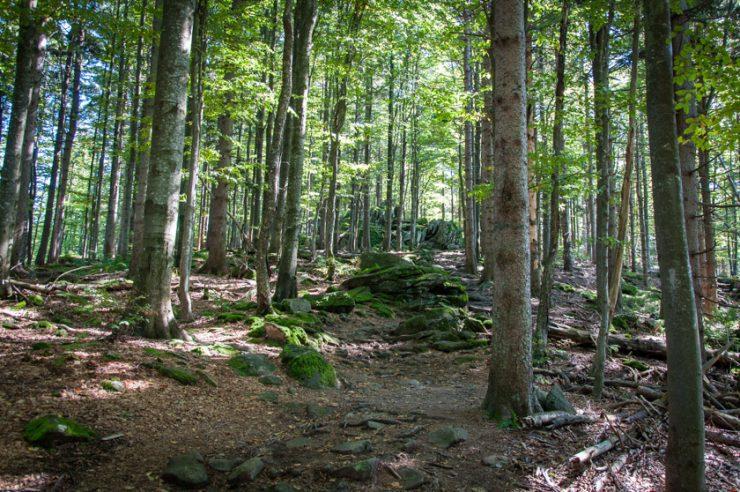 Lusen Wanderung Bayerischer Wald - ISARBLOG